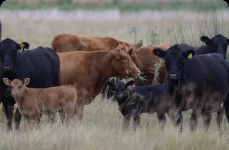 Lanzan el programa nacional de carbono neutro para alimentos