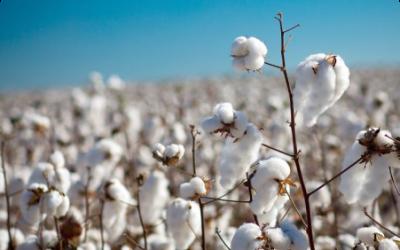 Se llevó a cabo un encuentro de sensibilización para la cadena de algodón