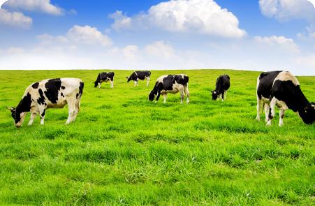 Charla del PACN para el sector lácteo